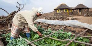 A farmer tends his crops.