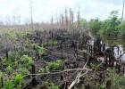 Fire destruction on peatlands