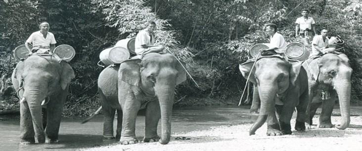 1960s Thailand malaria control