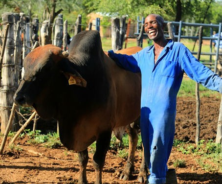 Sydney Msimanga proudly shows off one of his bulls. Through a USAID-supported project, Sydney receives training and technical as