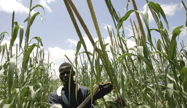 New guidelines on property rights will support the interests of businesses and smallholder farmers, such as this one in Nigeria.