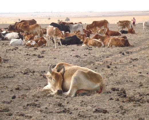 Kenya drought 2009