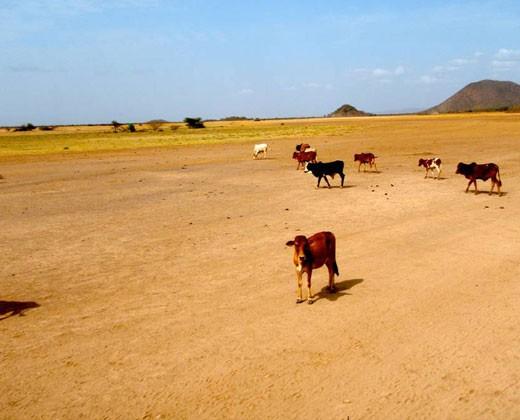 Borana region, Ethiopia