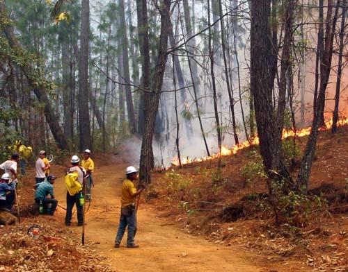 Forest management trainees practice fire control techniques at Sierra de Manantlan Biosphere Reserve, Jalisco, Mexico, as part o