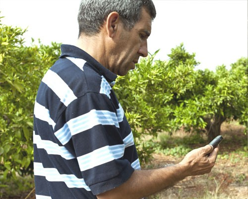 Mohammed Azzimani checks the daily irrigation advice he receives from USAID via an SMS message sent to his mobile phone.