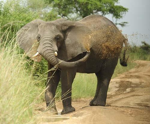 Sudan's Wildlife - Photo of elephant