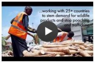 Click here to play Conservation is Development video