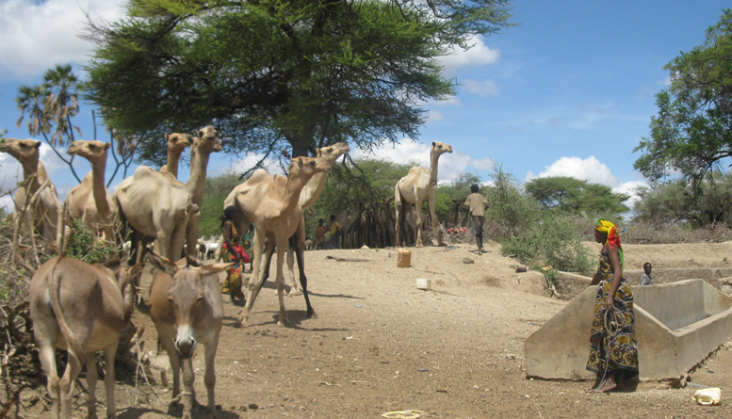 An ethnic Somali woman leads her camels to water at a well rehabilitated with USAID/OFDA support in Isiolo County, Kenya.