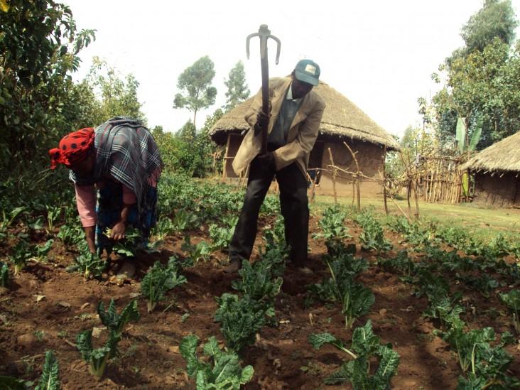 Jemanesh Debela works in her garden with her husband.