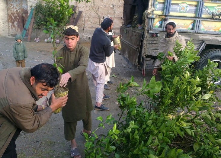 USAID provides saplings and necessary technical support to create new vineyards and rehabilitate old ones.