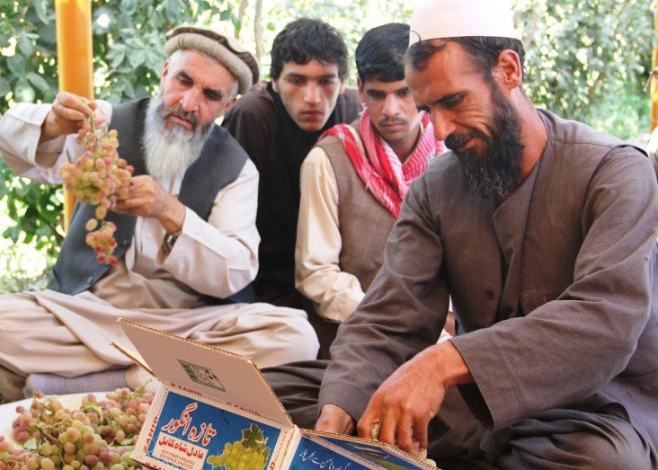 Proper packaging, sorting and grading is necessary to bring Afghan fruit up to international export standards.