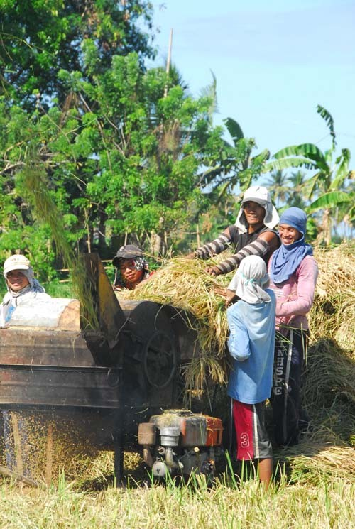 Farmers use a paddy thresher to separate rice straw from rice grains in a field in Aklan province.
