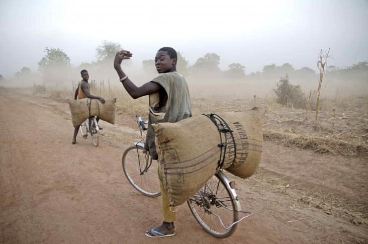 Young men on bicycles carry crops on a dirt road.
