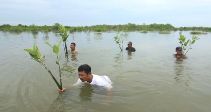 Rusli and his fellow fishermen plant mangrove saplings in North Sumatra.