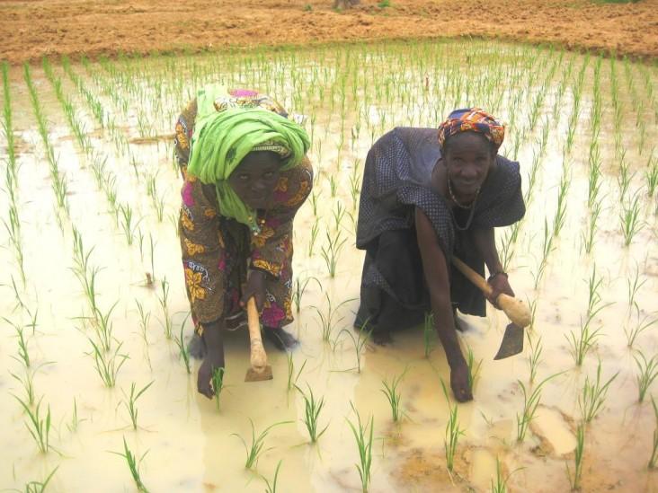 Mali – Agriculture et sécurité alimentaire