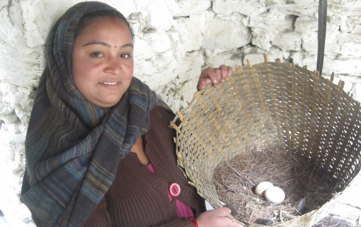 Nan Devi Ghotane shows eggs from the chickens provided by USAID.