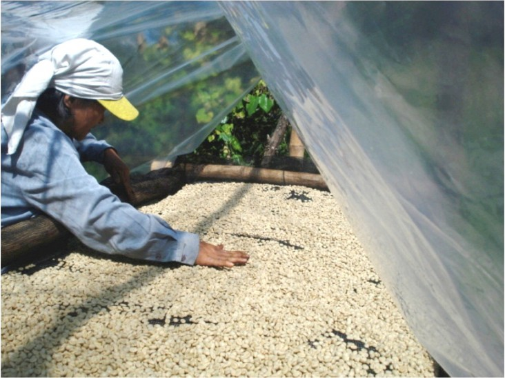 Kalsada coffee introduced an innovative coffee bean drying technology to their growers.