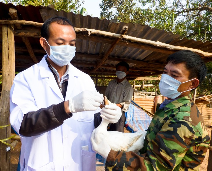 Farmer Vo Duy Ich, right, works closely with veterinary officials in Laos to ensure that his flock of layer ducks stays healthy.