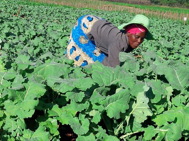 Shuvai Manjemure tends to vegetables in her garden.