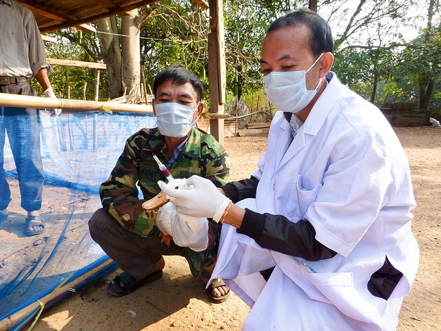 Veterinary officials work closely with farmers in Laos to help ensure their flocks stay healthy.