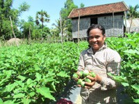 Proeurn Plech (pictured) and her husband, Chhorn Poeurn, have seen a marked decrease in disease on their eggplant crops.