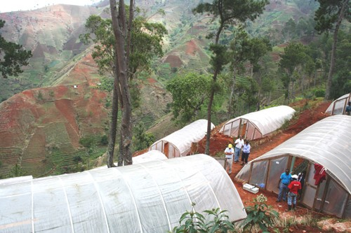 A view of the flower growers' association's greenhouses, constructed on terraces.