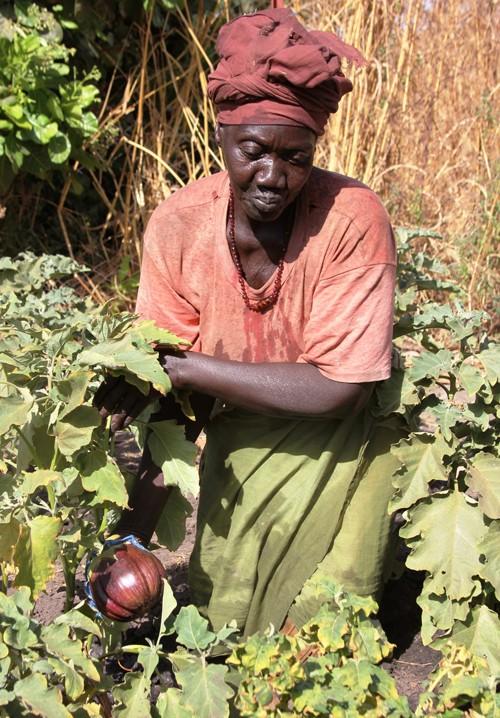 Khadi Diouf displays a ripe eggplant.