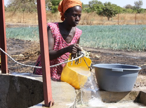 Diara Mané pours water from the well into a holding basin