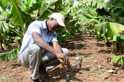 Crispen Manyuchi, a Zim-AIED extension officer, demonstrates how micro-jet technology works. Properly irrigated fields help incr