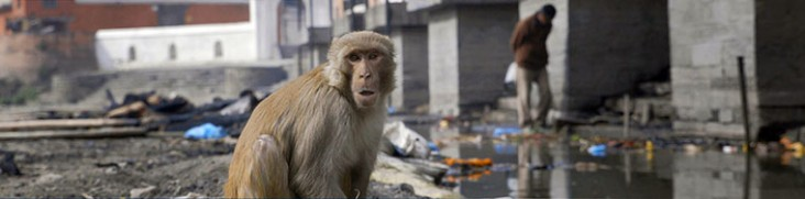 A monkey sits next to dirty water.