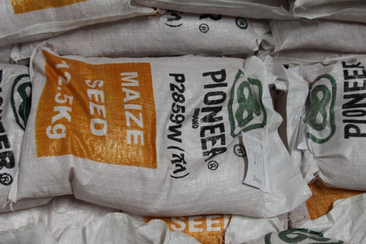 A bag of DuPont Pioneer maize seed ready for planting.