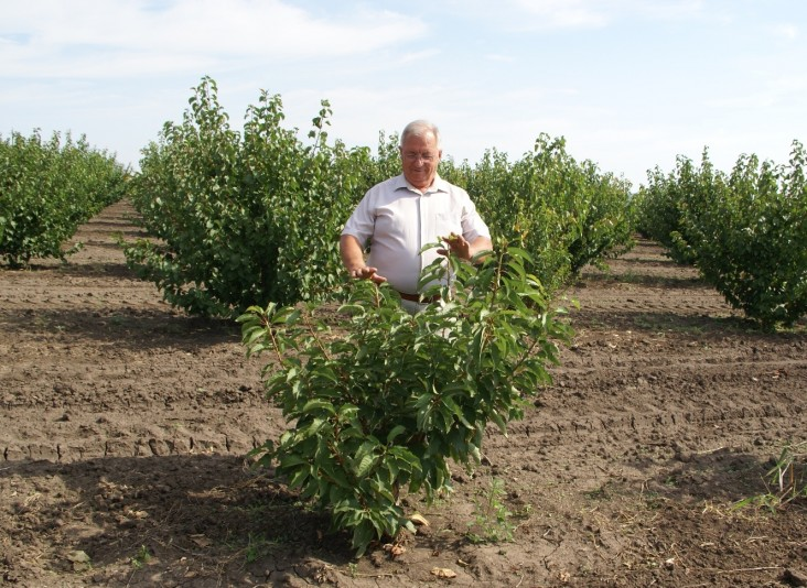 New Pruning Techniques Help Moldovan Cherry Producers Increase Crop and Fruit Quality