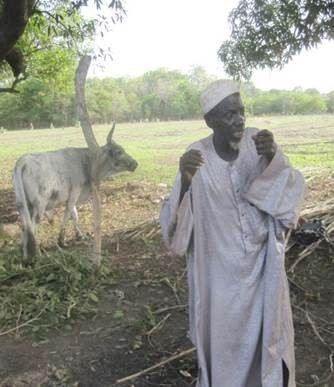 Un éleveur ayant retrouvé un bœuf volé grâce au comité de veille
