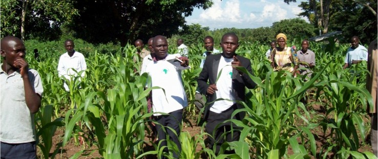 Innovators and ResilientAfrica Network staff meet with farmers to evaluate crop condition and search for weeds and pests.