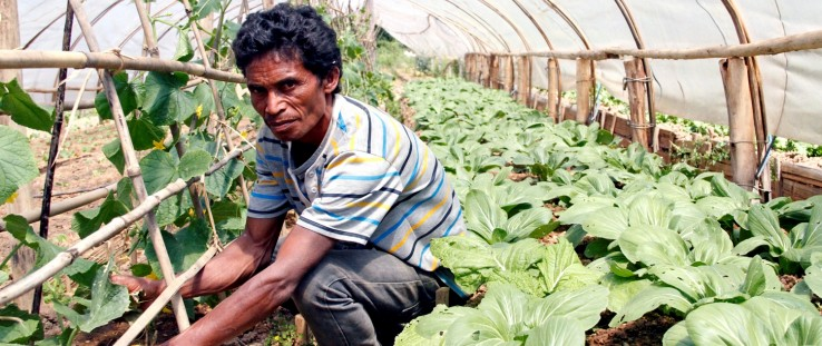 Farmer Alberto Martins is using modern techniques learned from USAID's horticulture value-chain project.