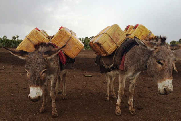 Residents of Fedha'ad used to get water for their consumption and their livestock from a surface dam during the dry season. This required a roundtrip trek of approximately 60km; they relied on seasonal surface ponds and birkads during the rainy season.
