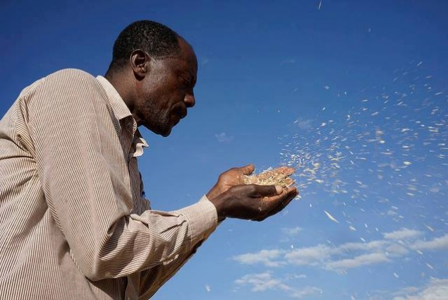 Farmer Melese Tsegaye blows to clean and select Kingbird variety wheat seed for his field. The seed is from the Kulumsa Research Station, Boru Lencha village, Hetosa district, Arsi highlands.