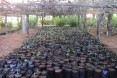Tree nursery developed in the hot and dry Androy region, in southern Madagascar, by the USAID-funded food security program
