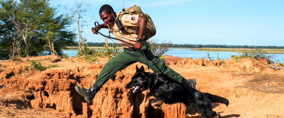 Canine unit helps combat wildlife trafficking in the Lower Zambezi