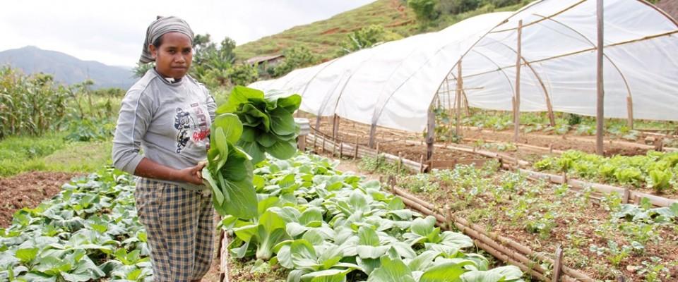 Timor-Leste Farmer