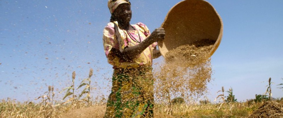 USAID helps train sorghum farmers in Kano techniques that will improve their yields