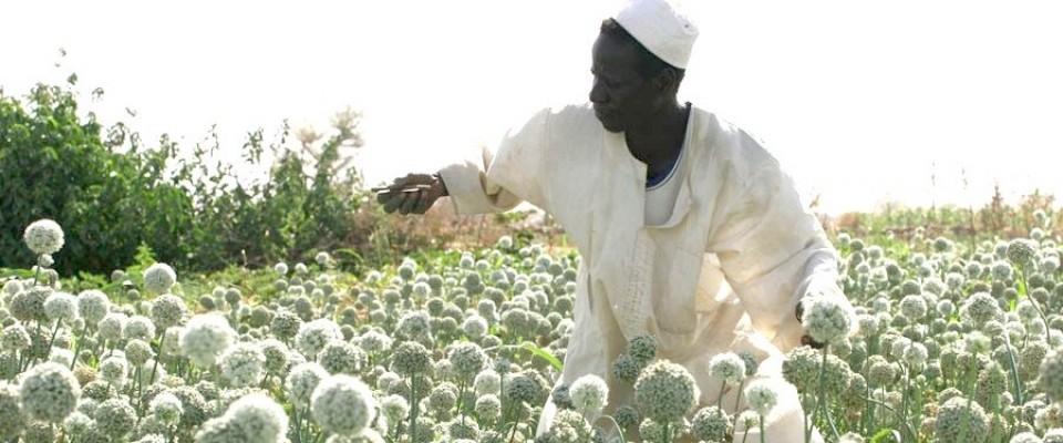 sudan cropsharing
