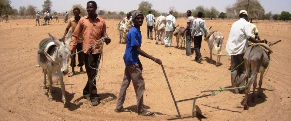 Sudan farmers
