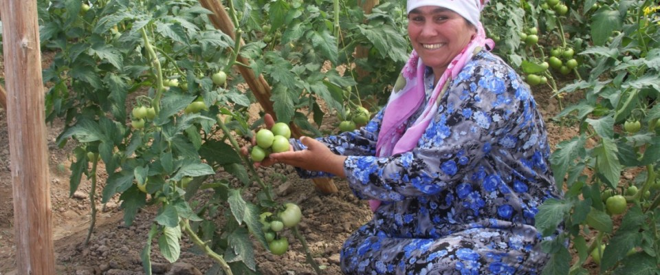 Tajikistan Country Profile Photo
