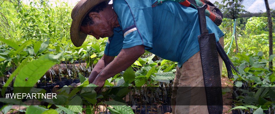 Improving Cacao Production