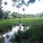 Gestion durable et concertée  des ressources à la frontière  sénégalo-gambienne