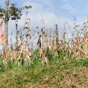 Reaching rural areas in Kenya, Uganda and beyond