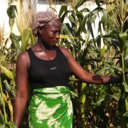 Mary Utsewa admires stalks of corn that eclipsed her in height. Thanks to a USAID donation, she recently harvested 1,000 kilograms to consume and sell.