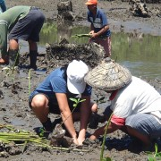 Mangrove planting in Zamboanga Sibugay in Mindanao.