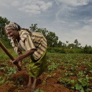 USAID helps small-scale farmers and business people in Kenya acquire the skills, technology, loans, and market connections they